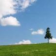 春、日和-草原-