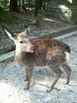 ばんび〜の小鹿は可愛いな〜♪